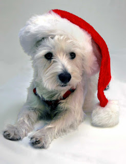 Dangerous Winter Holiday Plants for Dogs