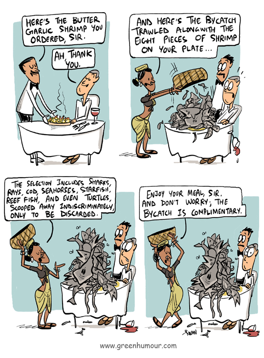 Green Humour: Shrimp Trawling and Bycatch