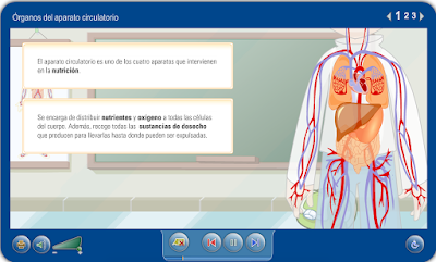 http://repositorio.educa.jccm.es/portal/odes/conocimiento_del_medio/el_aparato_circulatorio_humano/contenido/cm02_oa01_es/index.html