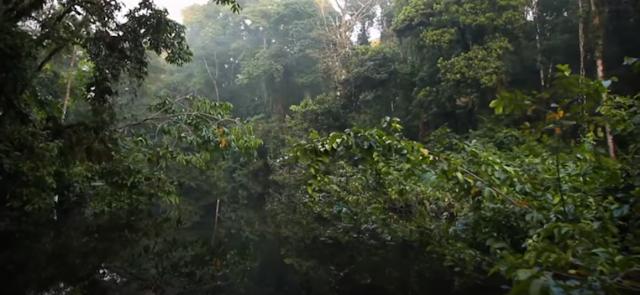 Liens entre l'homme et l'arbre : un grand mystère (vidéo)