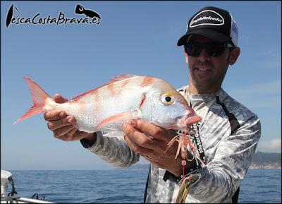pagel graphiteleader protone daiwa pirates pesca costa brava jjpescasport - JORANDAS DE JIGGING Y SPINNING