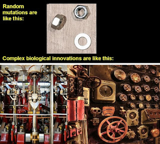 complex biological innovation