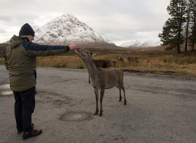 Photo of Phil feeding a hind in Glencoe