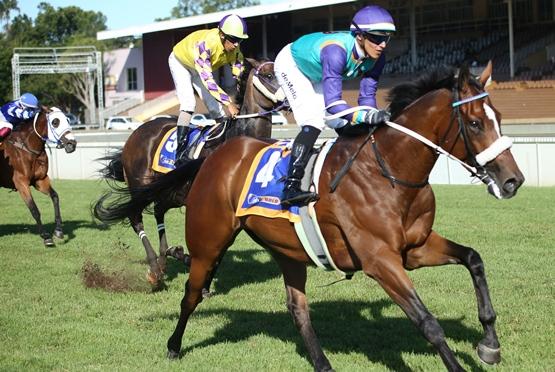 Head Honcho - Sun Met 2020 - Horse Profile
