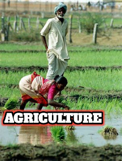 Is a bsc in agriculture hard to study for?,bsc in agriculture