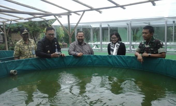 Budidaya Ikan Lele Ala Kodim 0508/Depok