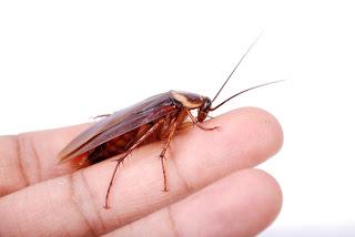 хлебарки в дома