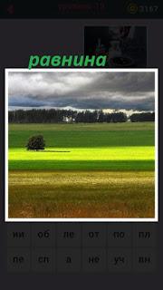 зеленая равнина и одинокое дерево в середине