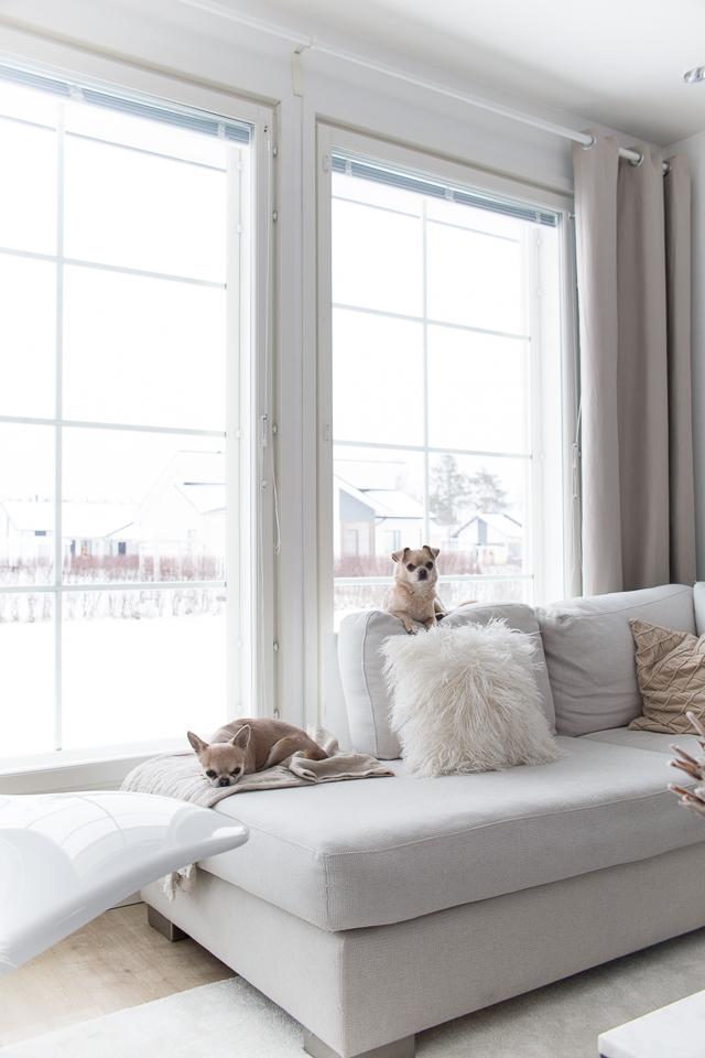 Villa H, koirat, chihuahua, olohuone