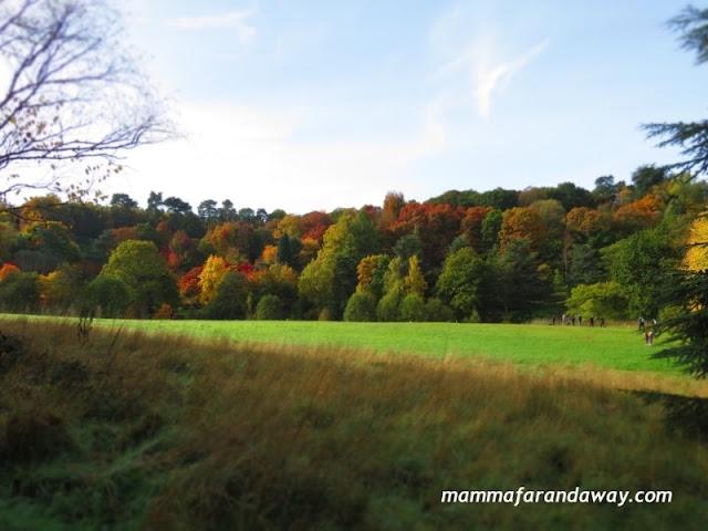 boschi foliage inghilterra