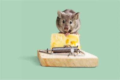 Basmi Tikus Tanpa Ribet, Berikut 4 Rekomendasi Alat Perangkap Tikus Paling Ampuh