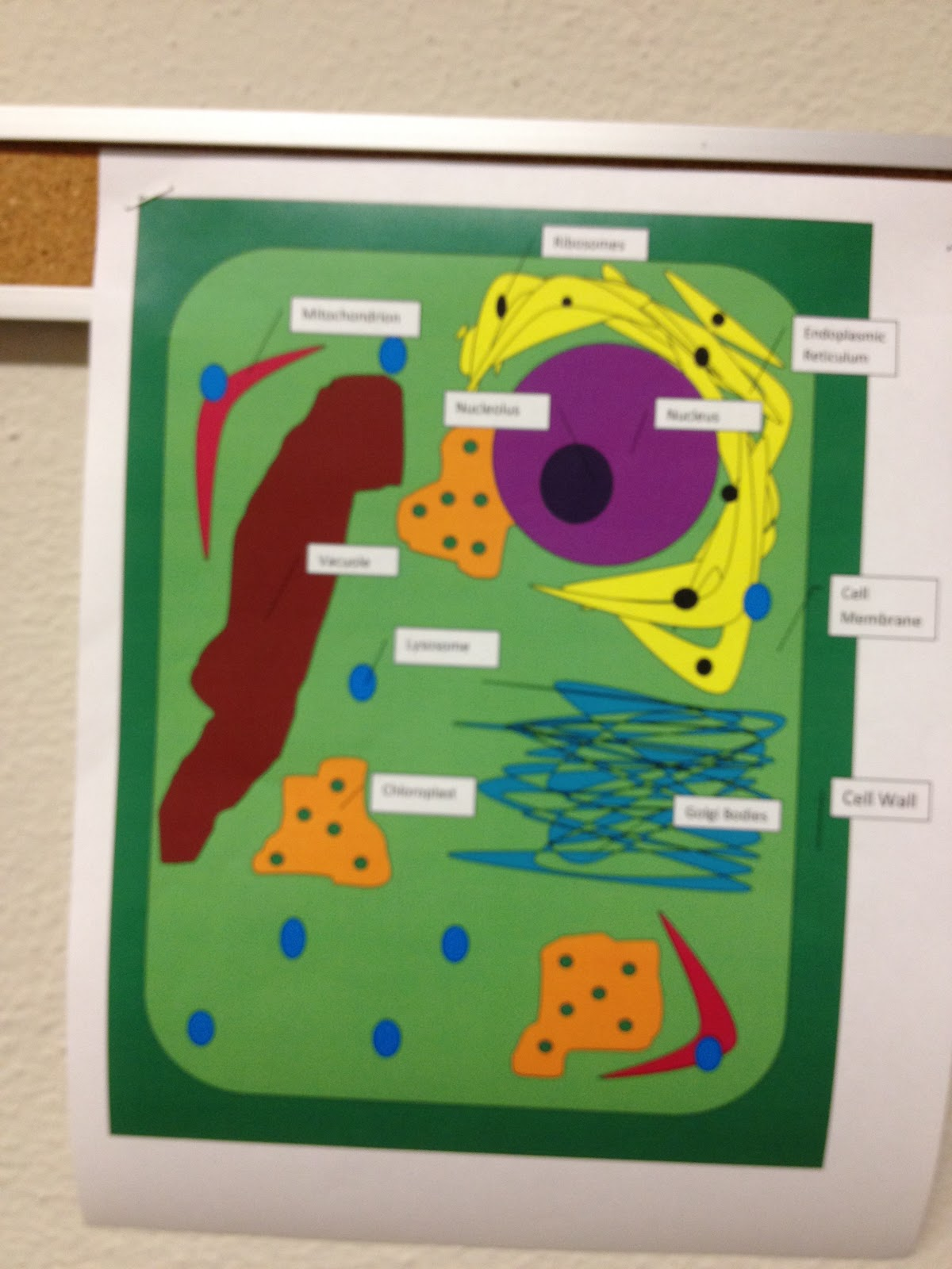 Bits And Pieces Of Middle School Plant Cells
