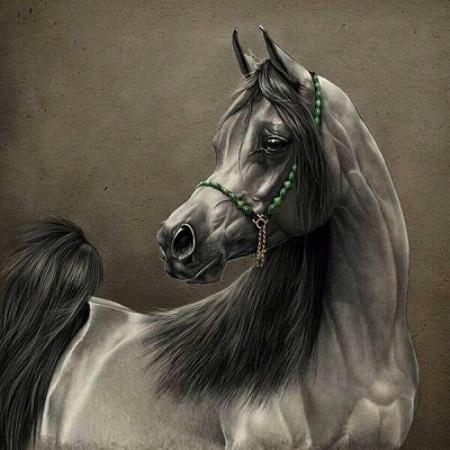 صور أحصنة 2019 خلفيات خيول صور حصان جميلة Hd يلا صور