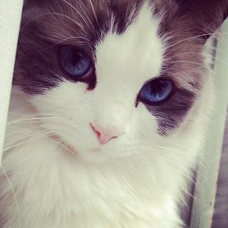 سؤال واجابه هل القطط تسبب العقم للبنات - معلومات تهمك