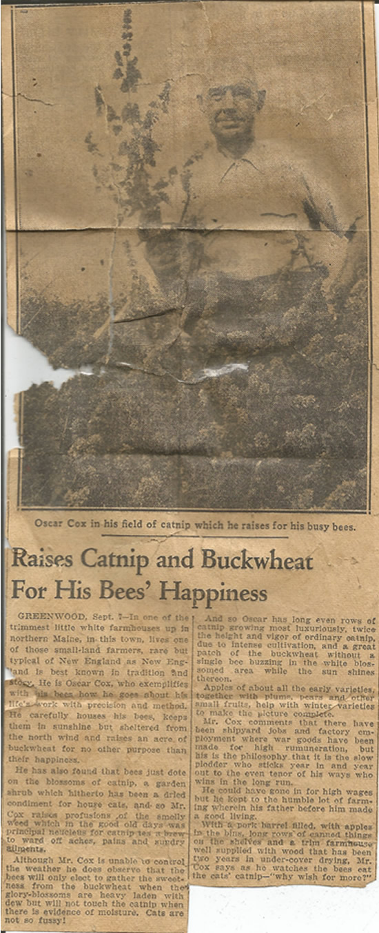 Newspaper article on Oscar Cox  How he raises catnip and buckwheat for his bees happiness.
