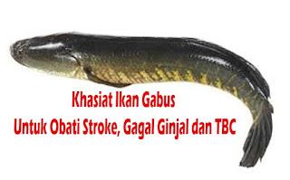 manfaat ikan gabus untuk obati penyakit