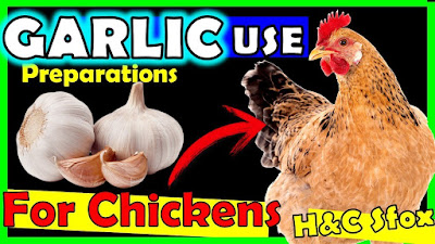 garlic in poultry