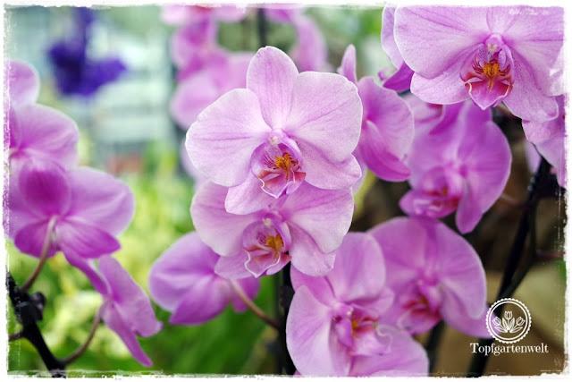 Gartenblog Topfgartenwelt Gartenmesse Stuttgart 2017: Orchideen