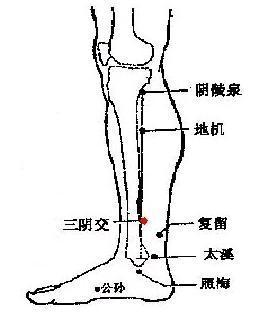 經絡健脾法。就可以迅速增強人體的氣血 - 穴道經絡引導