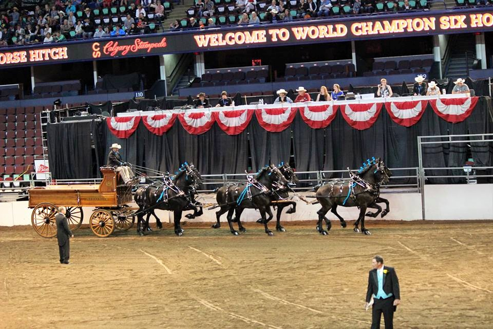 Eaglesfield Percherons Calgary Stampede Friday July 4 2014