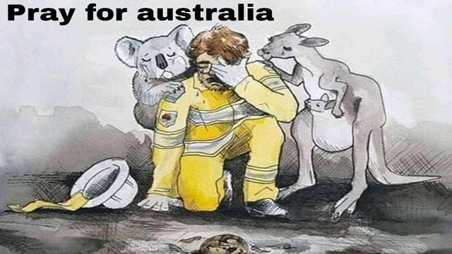 In Australia bushfire, many animals lost their lives, this series covers what are the causes, permanent effects of fire in Australia involving human life