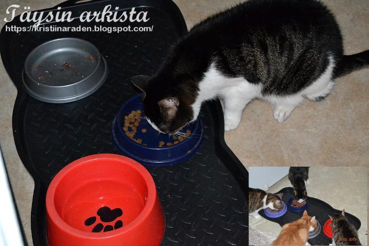 Kissa syö