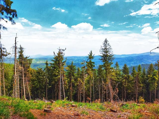 wycinka lasu, ładne widoki na zielone zagłębie Wałbrzycha
