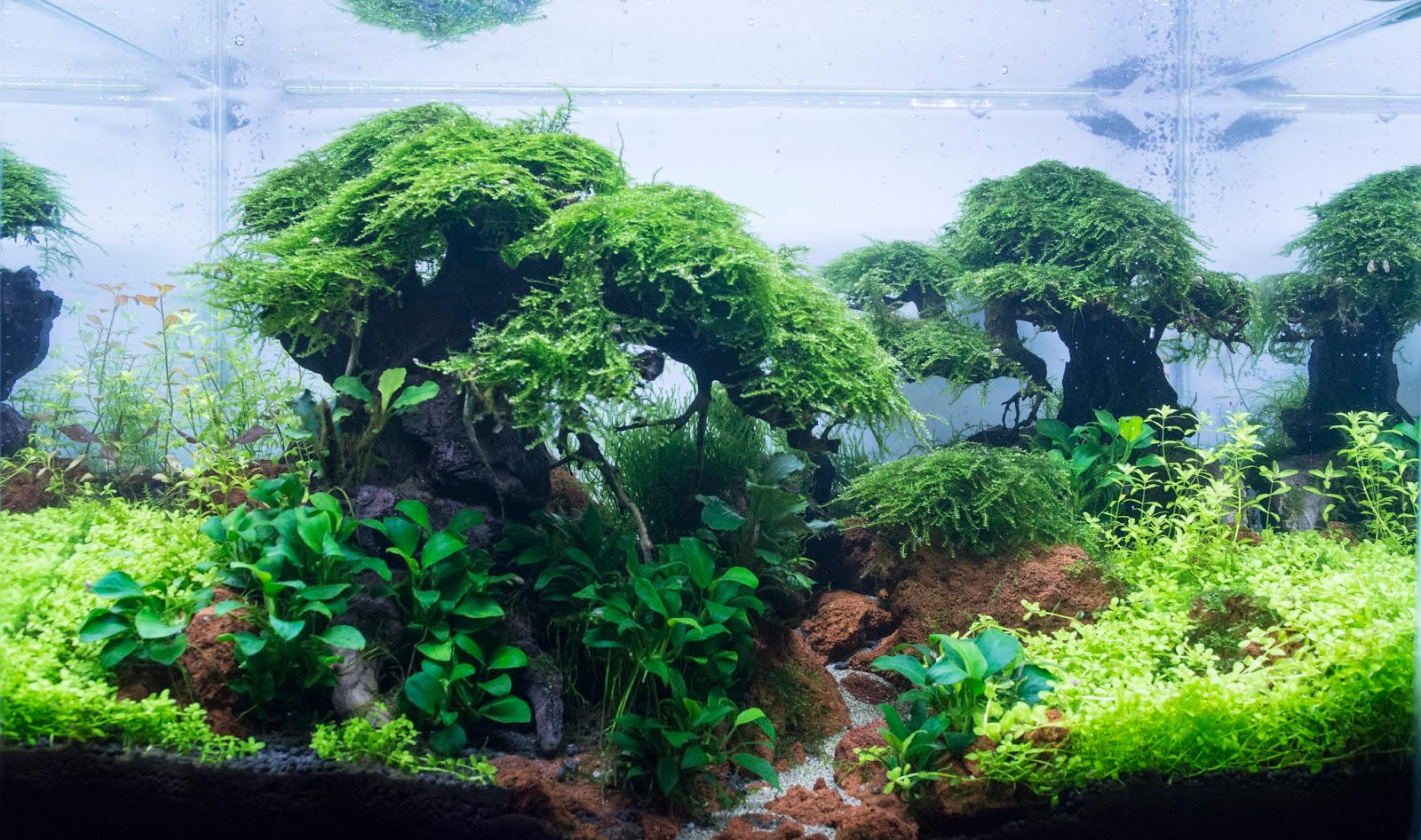 aquadesign for aquascaping enthusiasts on feedspot rss feed