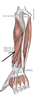 abductor pollicis longus- by  www.learningwayeasy.com