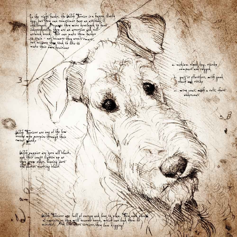 06-Welsh-Terrier-Face-Leonardo-s-Dogs-Cats-and-Dogs-Drawn-in-the-style-of-Leonardo-da-Vinci