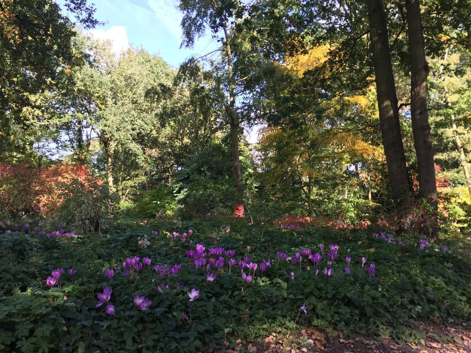 Writtle University College Landscape Blog Garden Design Students