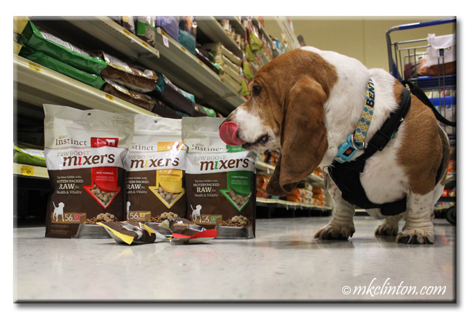 Bentley Basset licking mouth over Instinct Raw Boost Mixers in PetSmart