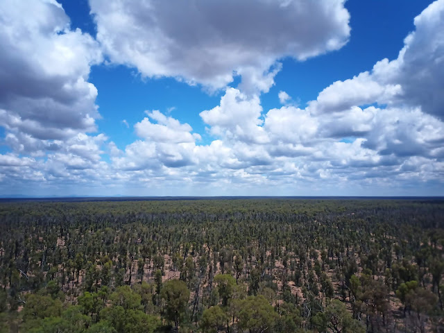 Aerial view of Pilliga Forest and beyond
