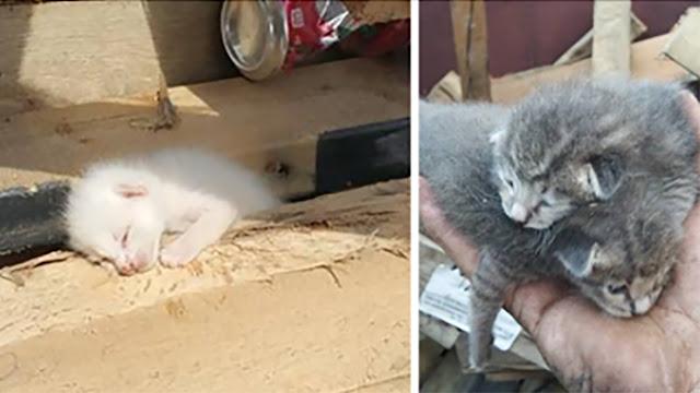 Парень нашёл в помойке котят в клею и решил им помочь