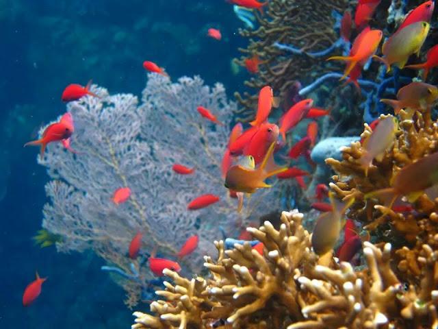 foto bawah laut pulau menjangan bali