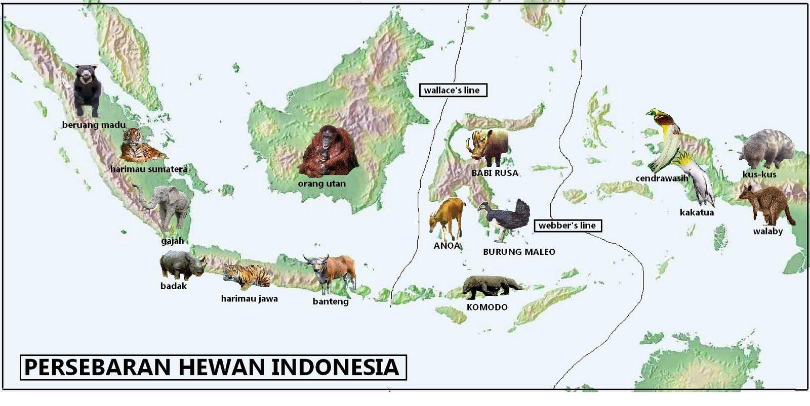 Peta Persebaran Flora Dan ...