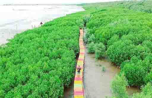 Hutan Mangrove Makassar