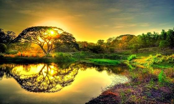 Benarkah Pohon Tuba, Salah Satu Tumbuhan di Surga ?... Ini Jawabanya ...