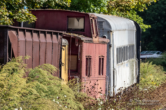 Railroad cars sitting in the weeds to the east of Martisco Station