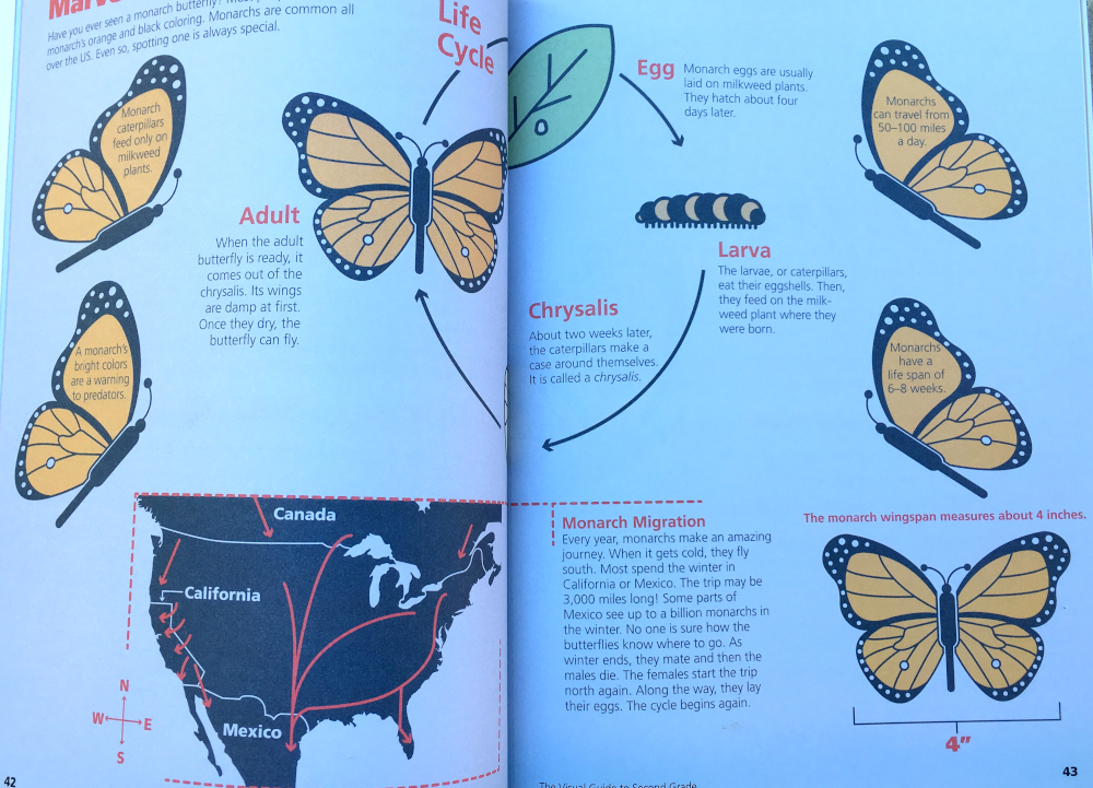 Page showing monarch butterfly life cyle and migration patterns.
