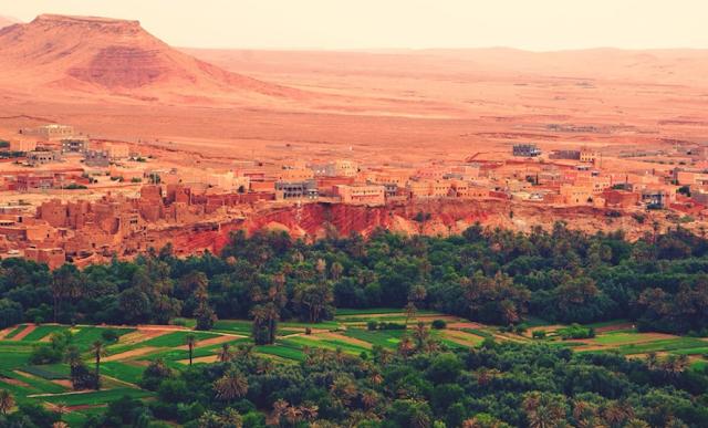 Desert garden of Tafilalt, Morocco