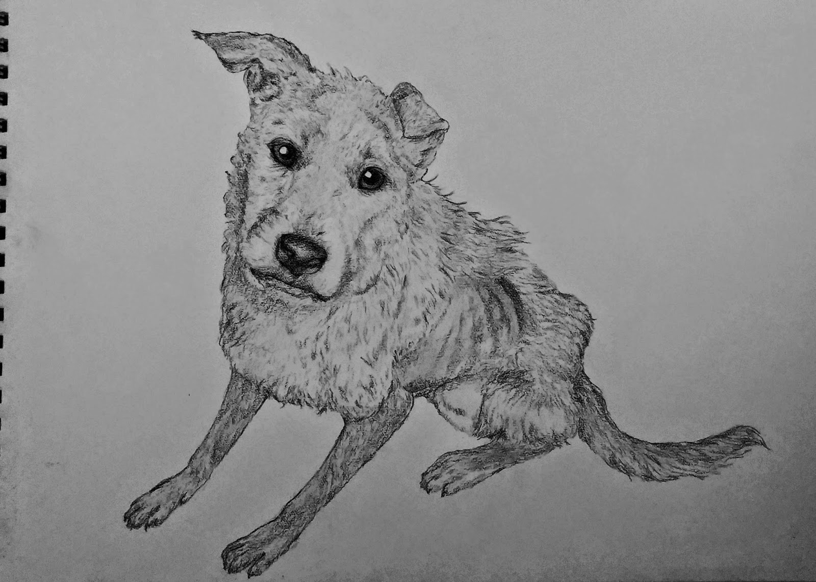 Masseu Learns To Sketch: Another sad dog drawing!
