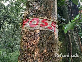 Pendakian Gunung Rajabasa via Sumur Kumbang || Petaniadv