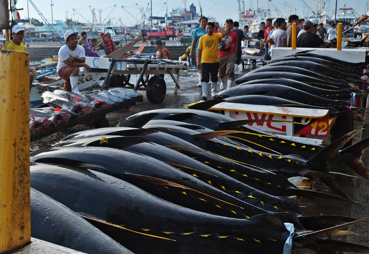 Morning scene at General Santos City Fish Port