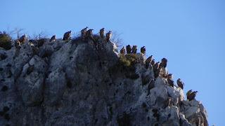Alquezar.Huesca.Birdwatching