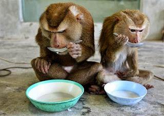 Sms Monkey