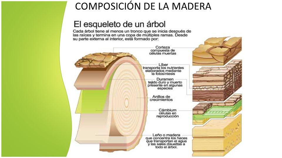 Club maderero tipos y clasificaci n de la madera for Tipos de arboles y sus caracteristicas