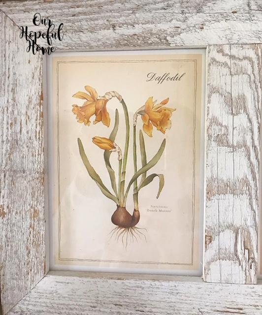 daffodil bulb botanical print rustic barn wood frame
