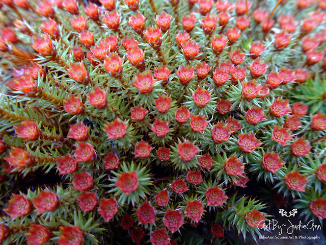 Red Flowing Moss