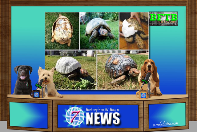 BFTB NETWoof News with a tortoise on the back screen